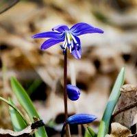 Да, просто весна!.. :: Наталья Костенко