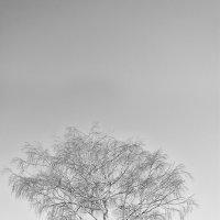 Серёга на дереве :: Женя Рыжов