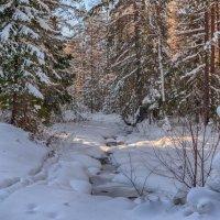 Зимний день :: vladimir Bormotov
