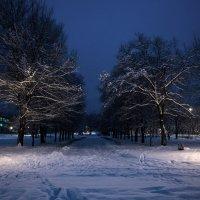 Зимняя алея, ночью. :: Андрей Боталов