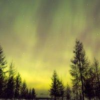Полярная ночь :: Михаил Потапов