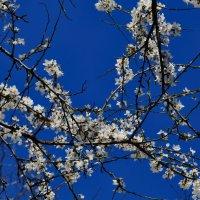 И всё-таки весна :: Валерий Дворников