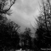 Один із похмурих днів зими, що минула ... :: Nazar Guziy