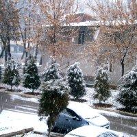 Однажды утром в Ташкент...вдруг нагрянула зима....!!! :: Людмила Богданова (Скачко)