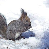 Закуска на снегу :: Анатолий Иргл