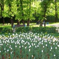 В городском сквере  весной :: Елена Семигина