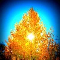 Осень :: Анатолий Мартынюк