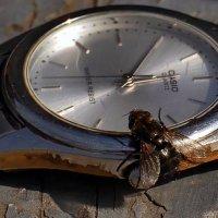 Который час ? О как же долго я зимой спала... :: Александр Резуненко
