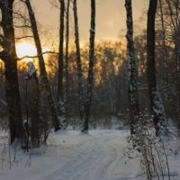 вечер в лесу :: Светлана Соловьева