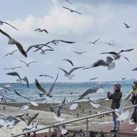 чайки и люди :: Валерий Дворников