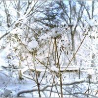 зимнее... :: Юрий Ефимов