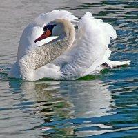 Благородная птица! :: Наталья