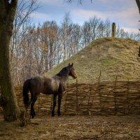 Ой чий-то кінь стоїть... :: Сергей Офицер