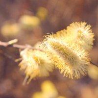 весна уже ближе и ближе ) :: Jeny Gurina