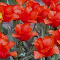Яркая весна :: Nikolay Monahov