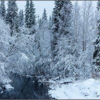 Зима в архангельских лесах. :: Владимир Прынков