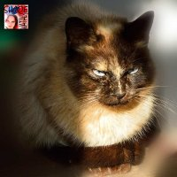 Кошка :: Наталья (ShadeNataly) Мельник