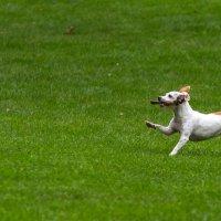 Собак в Брюгге :: Антон Бойкевич