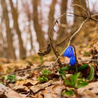 Цветок в лесу :: Юрий Стародубцев