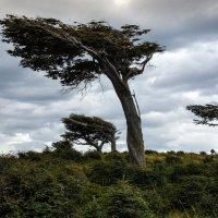 Деревья на Огненной земле :: Irina Shtukmaster