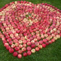 Яблочки сердечные :) :: Mariya laimite
