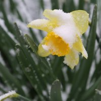 Как снег на голову! :: Пётр Четвериков