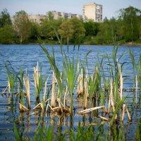 Озеро на краю города :: Николай Пекарский