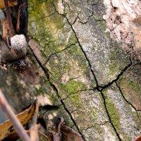 Дерево :: Наталья (ShadeNataly) Мельник