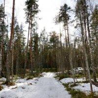 В лесу весна :: Валентина Папилова
