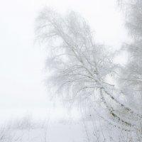 Зимний день. :: Андрей Боталов