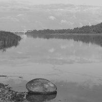 о собаке,реке,камнях и воде и притяжении... :: Владимир Мочалов