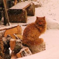 Что мне снег... :: Галина Pavlova