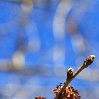 Неудержимая весенняя жажда роста :: Gleipneir Дария