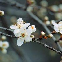 весна.. :: Ольга Маркарова