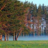Синий туман :: Милешкин Владимир Алексеевич