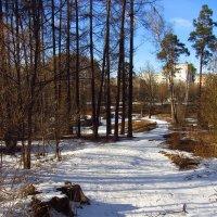 IMG_3844 - И все же, весна! :: Андрей Лукьянов