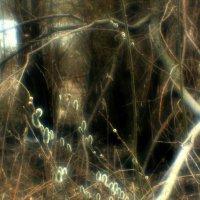 Вербы  в  темном  лесу... :: Валерия  Полещикова