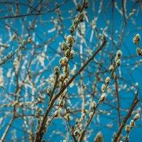 Весна пришла :: Игорь Вишняков