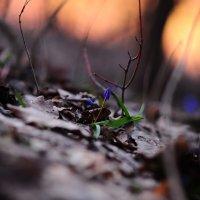 Первые цветы! :: Ольга Д