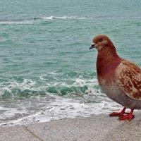 Я тоже хочу как чайки... :: СветЛана D
