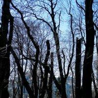 Весення голубизна :: Владимир Бровко