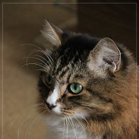 Портрет моего котейки)) :: Светлана Дмитриева