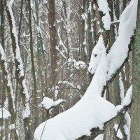Лошадка забралась на дерево,увидев лося :: Лидия (naum.lidiya)