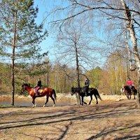 Поездка на лошадях :: Лидия (naum.lidiya)