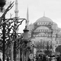 голубая мечеть :: Светлана Королева