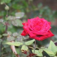 В саду :: Людмила