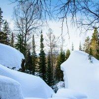 В лесу :: Дмитрий Брошко