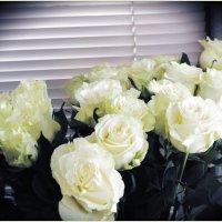 Белые розы, белые розы... :: Светлана Лысенко