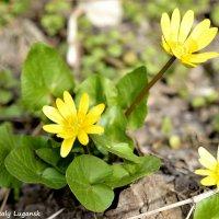 Желтый цветок :: Наталья (ShadeNataly) Мельник