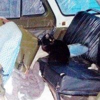 Чёрная кошка в разбитой машине своего хозяина :: Владимир Ростовский